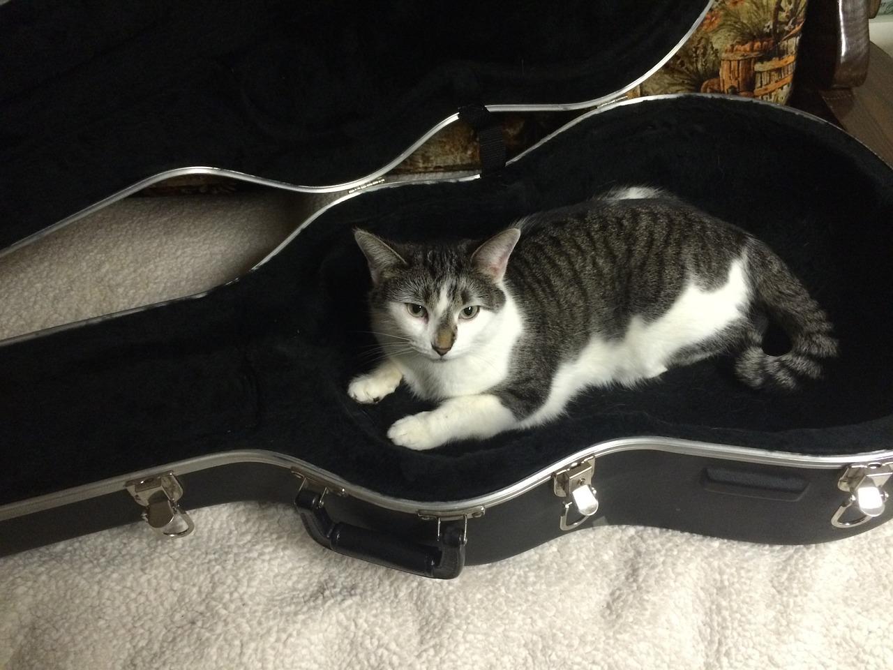 大事なギターを守るならこれでOK!ギターケース3種の違い解説!